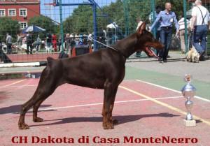 CH Daki Bar 2