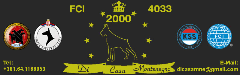 Dobermann Kennel :: DI CASA MONTENEGRO
